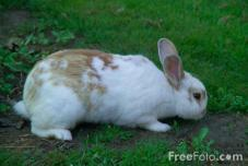 FreeFoto Rabbit